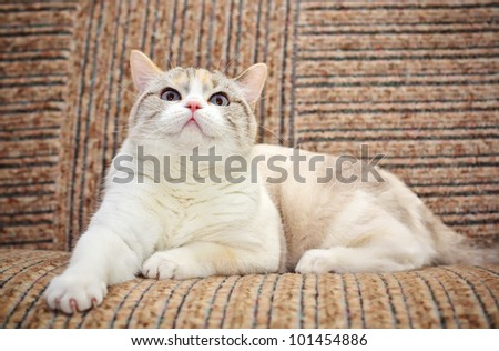 Beautiful cat lying on the sofa - stock photo