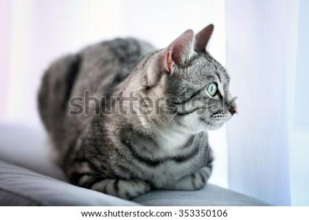 Beautiful cat near window close-up - stock photo