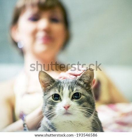 Beautiful cat on a background of his mistress - stock photo