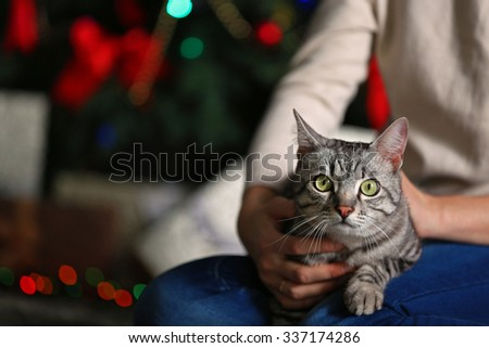 Beautiful cat on Christmas tree background - stock photo