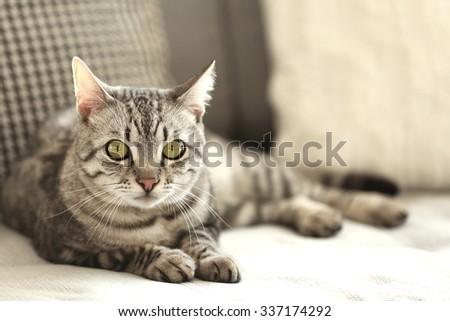Beautiful cat on sofa close-up - stock photo