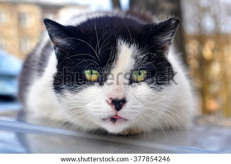 beautiful cat on the roof of the car