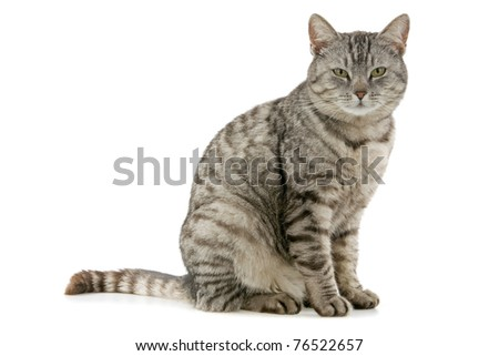 Beautiful cat ,on white background. - stock photo