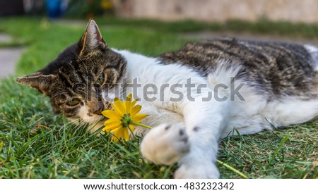 Beautiful Cat plays with a yellow Flower