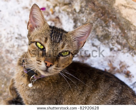 beautiful cat posing for photo - stock photo