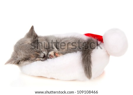 Beautiful cat sleep in a Santa Claus hat - stock photo