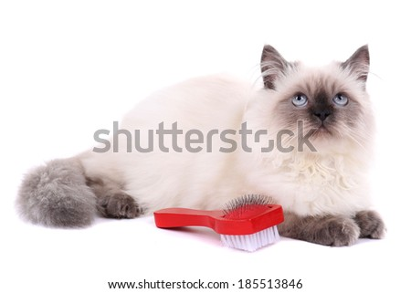 Beautiful cat with brush isolated on white - stock photo