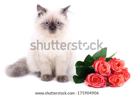 Beautiful cat with flowers isolated on white - stock photo