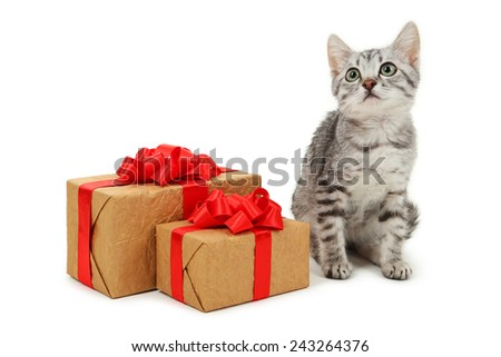 Beautiful cat with gift box isolated on white - stock photo