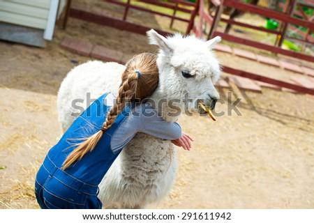 Beautiful caucasian toddler girl holding and embrace white furry alpaca lama camel - stock photo