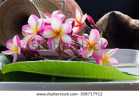 beautiful charming aroma pink flower plumeria made  more classic with vintage and boutique look for spa decoration