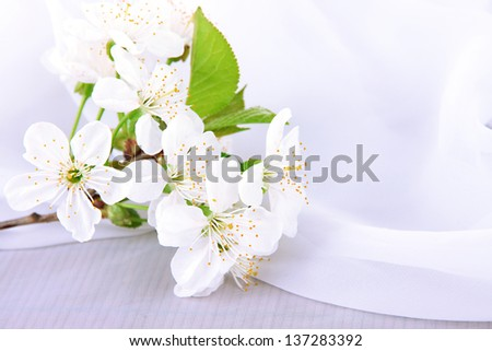 Beautiful cherry blossom on white background