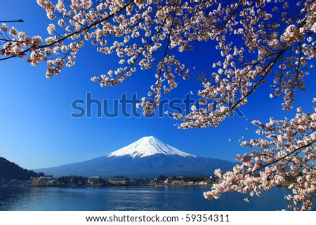 Beautiful cherry blossoms with Mount Fuji, japan - stock photo