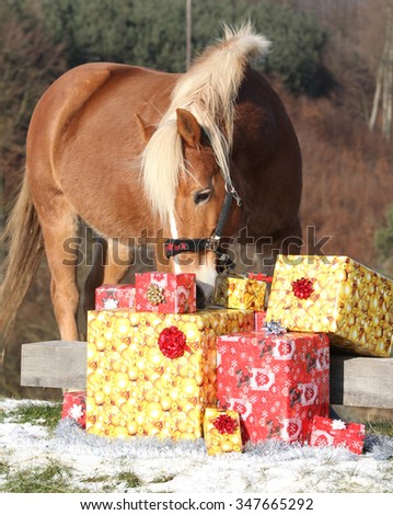 Beautiful chestnut horse with christmas gifts outside - stock photo