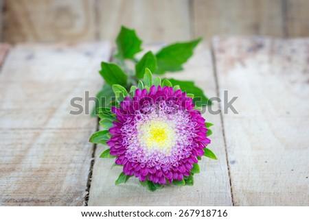 beautiful chrysanthemum on wooden background - stock photo