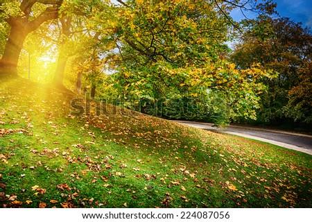 Beautiful city park at sunny autumn day  - stock photo