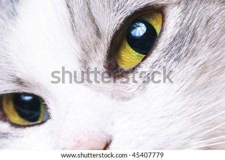 beautiful close up cat's face - stock photo
