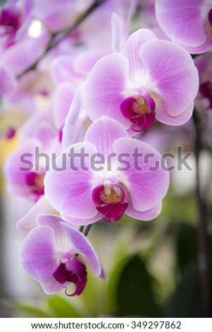 Beautiful Close up of orchid flower