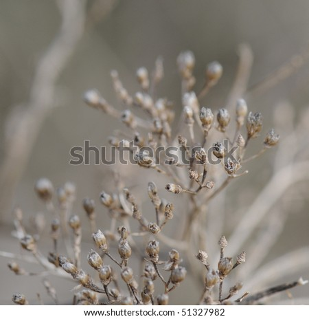 beautiful close-up view of a umbel - stock photo