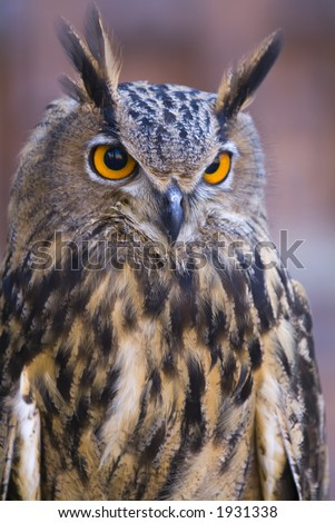 Beautiful close ups of barn owl 02 - stock photo