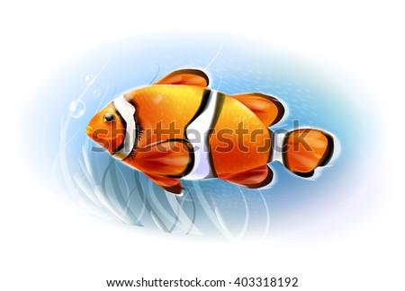 Beautiful clownfish in the sea.  Aquarium fish.  Underwater world. Realistic  illustration. - stock photo