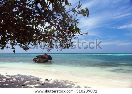 beautiful coastline, turquoise view of the sea with tropical tree and stone, minimal subject, Philippines Asia, Pacific Ocean - stock photo