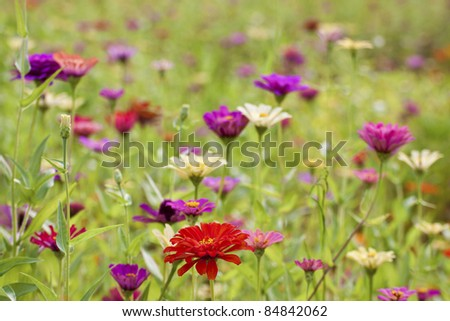 beautiful color flowers bloom in autumn - stock photo
