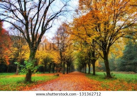 Beautiful colored trees in het Amsterdamse bos (Amsterdam wood) in the Netherlands. HDR - stock photo