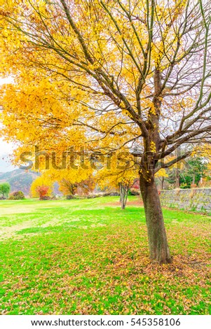 Beautiful Colorful Autumn Leaves