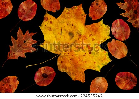 beautiful colorful autumn leaves on black background - stock photo