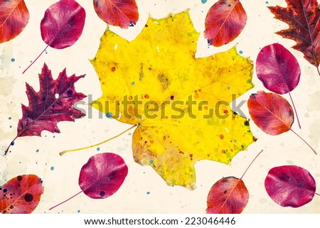 beautiful colorful autumn leaves on white background - stock photo