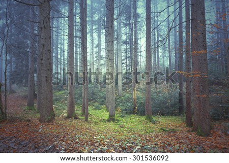 Beautiful colorful autumnal coniferous forest trees. Picture was taken in south east Slovenia. - stock photo