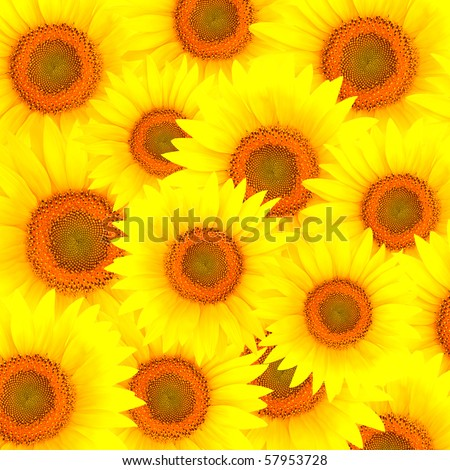 Beautiful colorful background from sunflower petals - stock photo