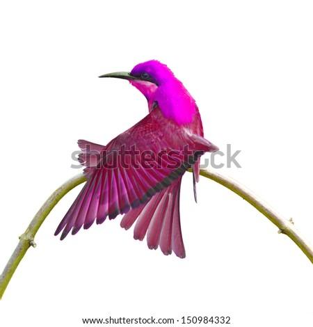 Beautiful colorful bird on white background - stock photo