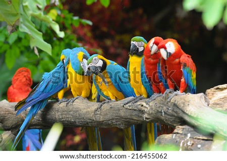Beautiful Colorful bird Scarlet Macaw on a branch - stock photo