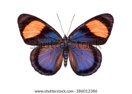 Beautiful colorful butterfly with black, red and orange wings isolated on white. Nymphalidae, Meadow Wanderer - stock photo