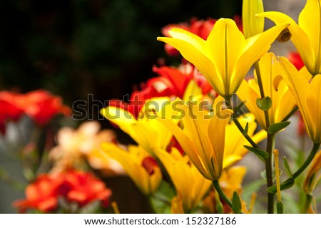 Beautiful colorful flower blooming in the garden