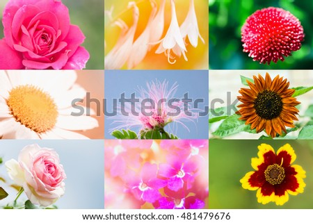 Beautiful colorful flower collection of different nine flowers.