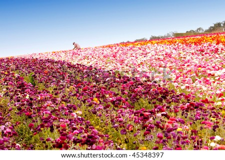 Beautiful colorful flowers in the field