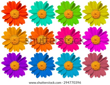 beautiful colorful flowers Isolated on White Background. - stock photo