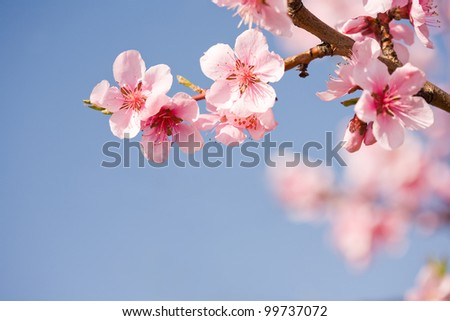 Beautiful colorful fresh spring flowers with clear blue sky. - stock photo