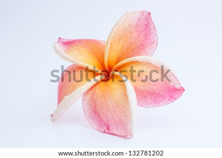 Beautiful colorful garden flower on a white background - stock photo