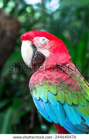 Beautiful colorful Macaw parrot on a sunny morning - stock photo