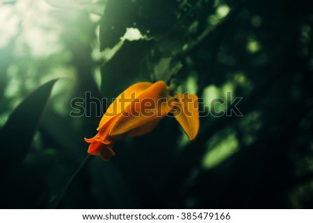 beautiful colorful new flowers in greenhouse  in botanical garden in spring time - stock photo
