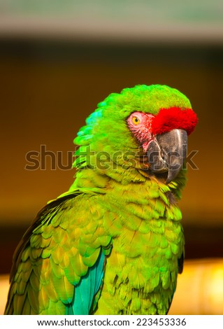 beautiful colorful parrot (macaw) sitting on his branch - stock photo