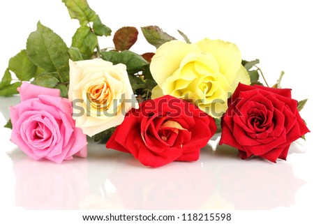 Beautiful colorful roses isolated on white