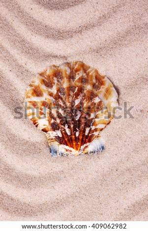 Beautiful colorful seashell on wavy sand background. Close-up - stock photo