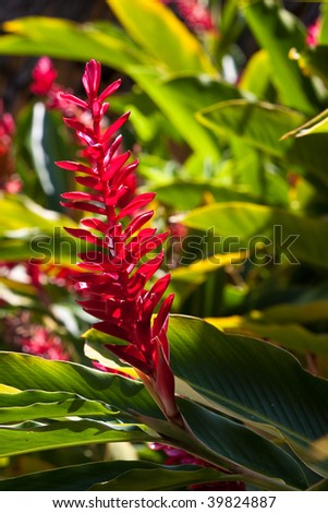 beautiful colorful tropical flower lit by the sun