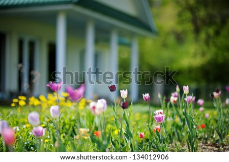 Beautiful colorful tulips in front of a big house - stock photo