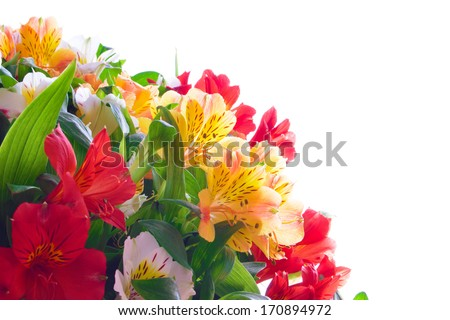 Beautiful Coloured Flowers on the White Background. Natural Floral Border - stock photo